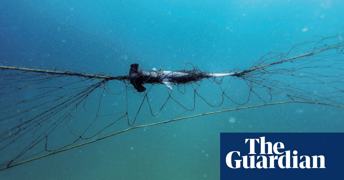 Calls to end 'indiscriminate deaths' after report reveals NSW shark nets kill a turtle every 20 days