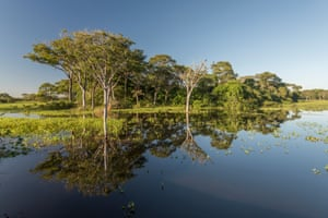Trees reflected in the Pantanal waters.