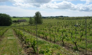 A south-facing filed of vines at Hällåkra vineyard in southern Sweden. Owner Håkan Hansson plans to almost double the area under vines within the next three years.