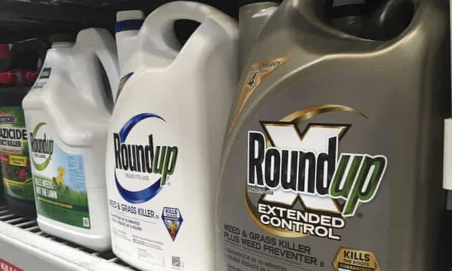 jury in federal court in San Francisco will decide whether Roundup weed killer caused a California man's cancer.
