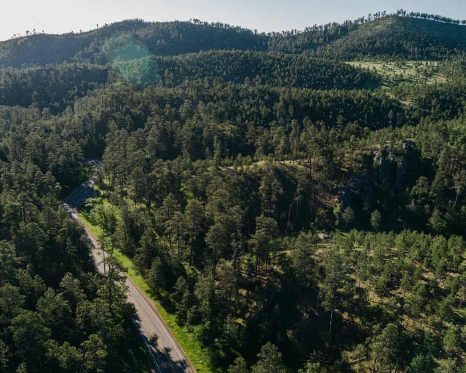 Black Hills National Forest.