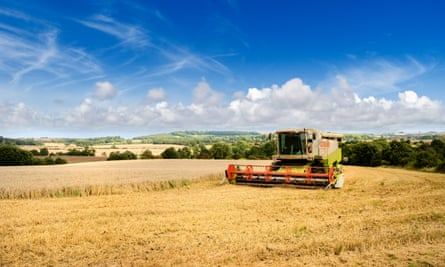 Harvesting wheat in Lincolnshire