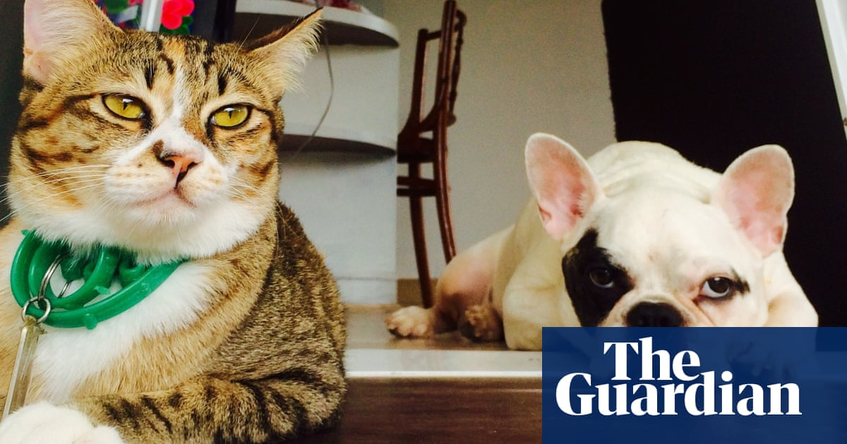 'Sentencing their dog to death': how the anti-vax movement spread to pets