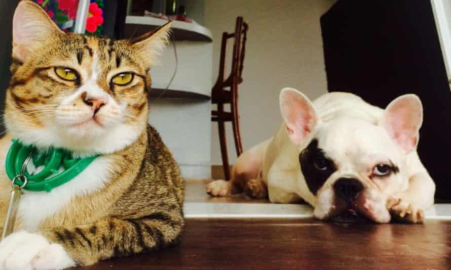 unimpressed dog and cat