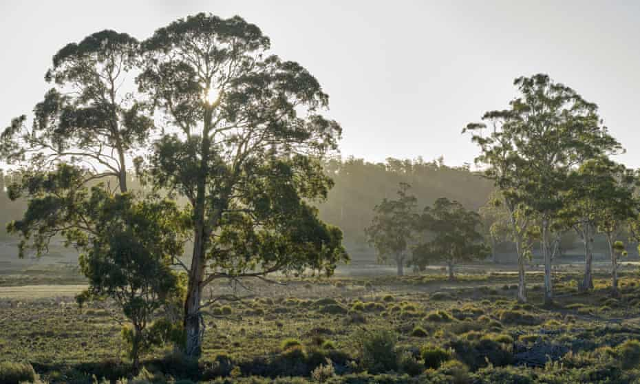 Trees in Prosser River Reserve