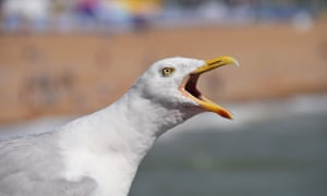 Seagull Brighton Pier