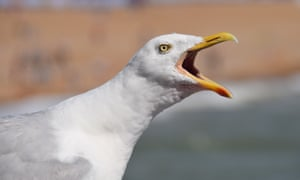Seagull at Brighton Pier