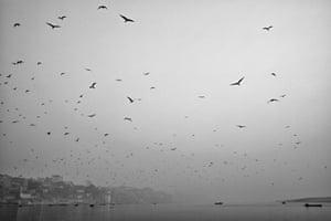 Hundreds of birds fly over the Ganges