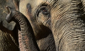 elephant at melbourne zoo
