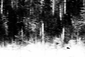 Winner, mammals: Jan van der Greef (Netherlands) The lonely hunter