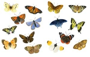 Outside Butterflies