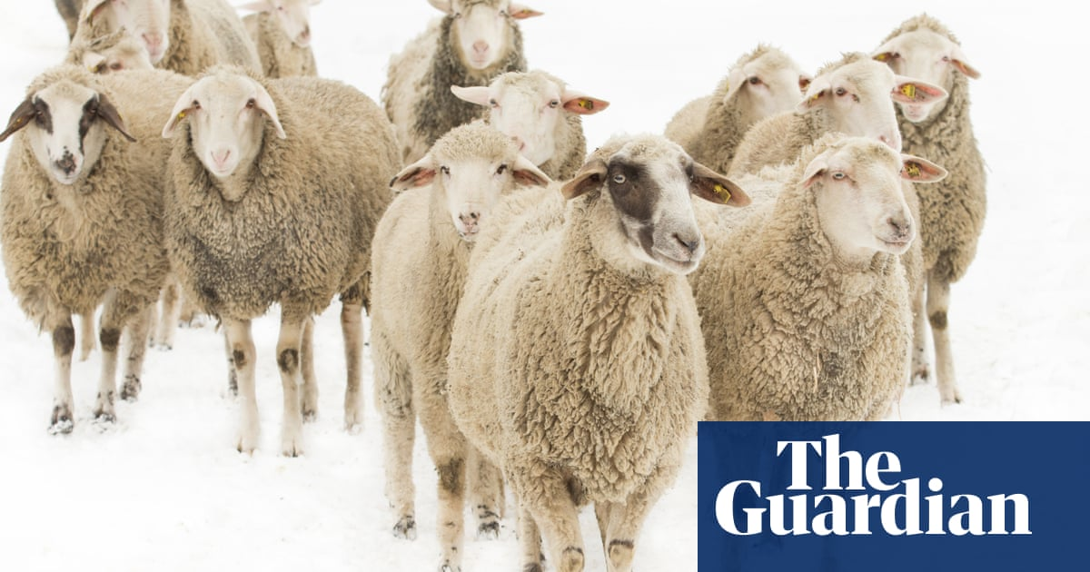 24a27eb23 Forget fur – is it time to stop wearing wool