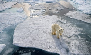A lone polar bear, one of the most iconic visual representations of climate change.