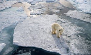 Chemical pollution has been found to cause brain damage in polar bears.