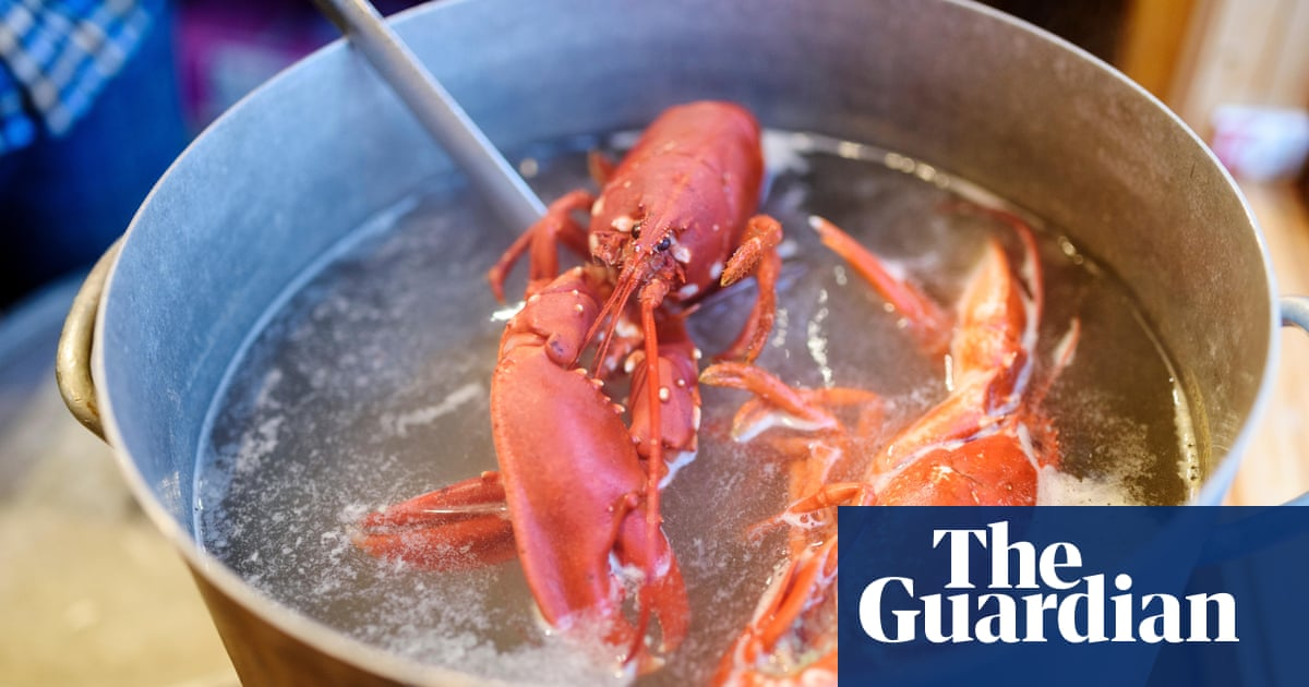 Is it wrong to boil lobsters alive? | World news | The Guardian