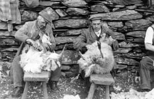 Sheep Shearing, 1951. Farm workers in Hafod y Llan do the job manually because mechanical shears crop the coat too short for the local climate. All photographs: Grace Robertson/Getty Images (except where indicated)