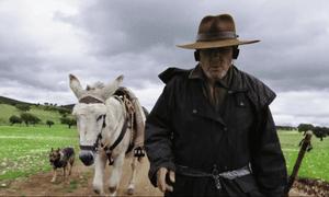 Come on Gorrión … Donkeyote