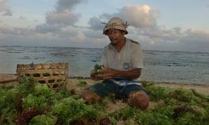 Seaweed farmer Nyoman Perti, 54, rinses the day's harvest in Nusa Dua, Bali, Indonesia.