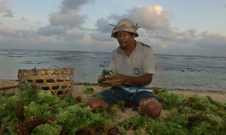 Could seaweed solve Indonesia's plastic crisis?