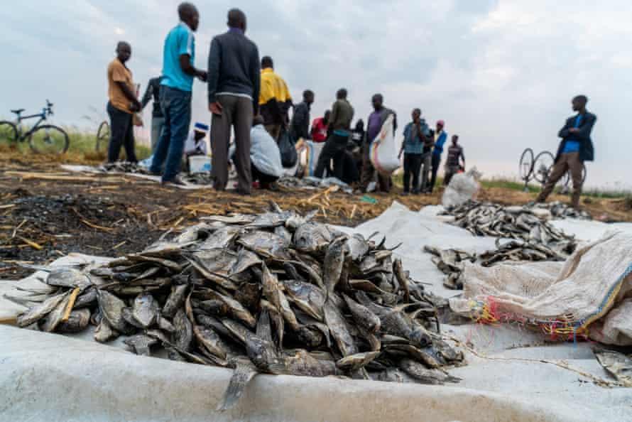 Dried fish on sale at Ntila market, Lake Chilwa, October 2020