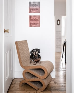 Dog's life: Mr Big on a Frank Gehry cardboard chair.