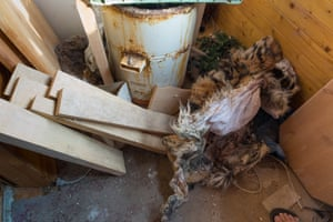 Tiger remains stashed in a house in Prague