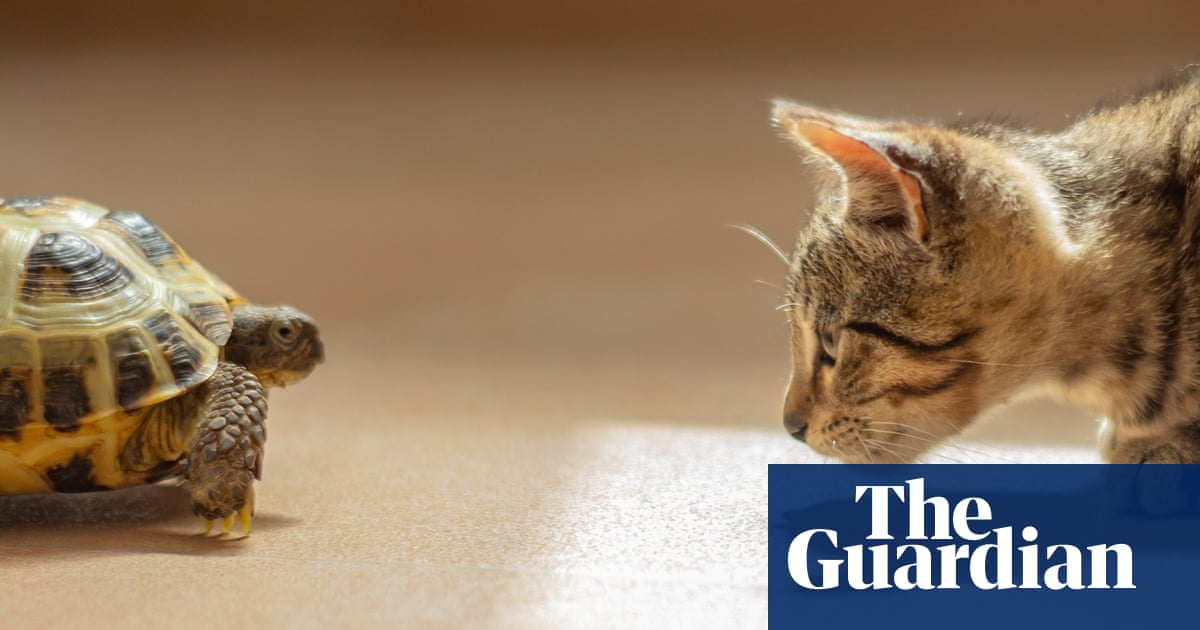 Tim Dowling: there's a cold snap forecast. The tortoise is in peril