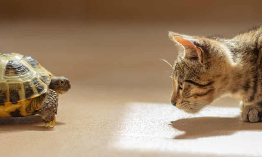 A cat and a tortoise facing each other