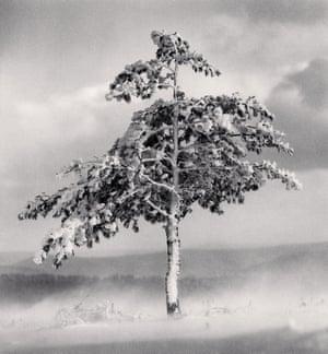 Tree in Snowdrift, Yangcao Hill, Wuchang, Heilongjiang, China 2011, michael kenna