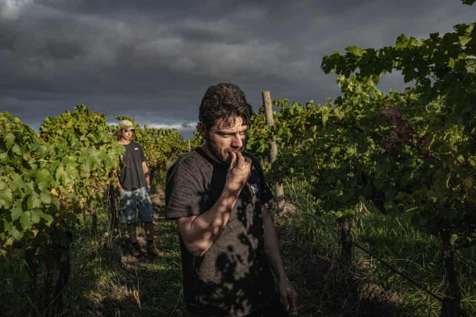 """Bandesh tastes Cabernet Sauvignon grapes to decide which batch he wants to purchase for the production of his second red wine """"Game Over"""" at Denton View Hill vineyard in Yarra Glen."""