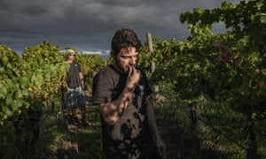 """Bandesh tastes Cabernet Sauvignon grapes to decide which batch wants to purchase for the production of his second red wine """"Game Over"""" at """"Denton"""" vineyard, in Healesville, Australia, on March 15 2021."""