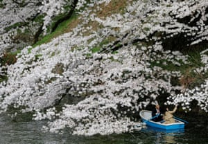 Visitors ride a boat next to blooming cherry blossoms at Chidorigafuchi Park in Tokyo