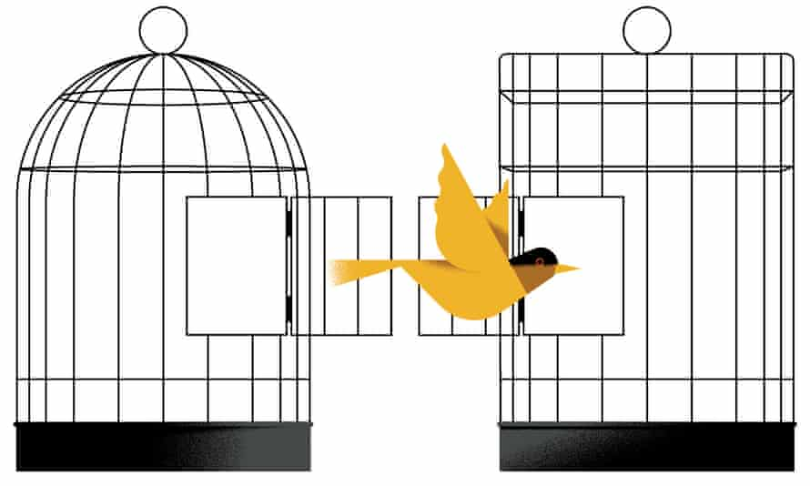 Illustration of a bird flying from one cage into another