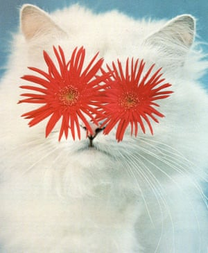 A collage of a cat with asters for eyes by Stephen Eichhorn