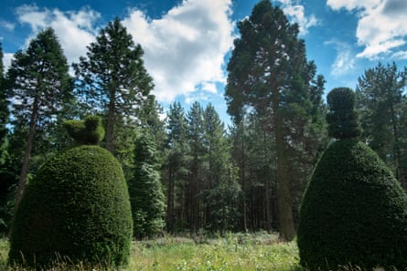 An avenue of ornamental yew trees