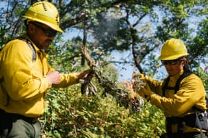 Harold Myers and Christopher Villarruel begin the prescribed burn with the traditional practice of using wormwood to ignite the forest floor.