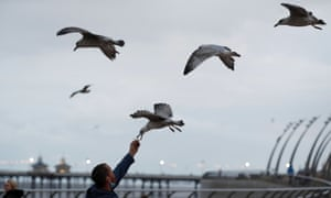 Man feeds chips to gulls