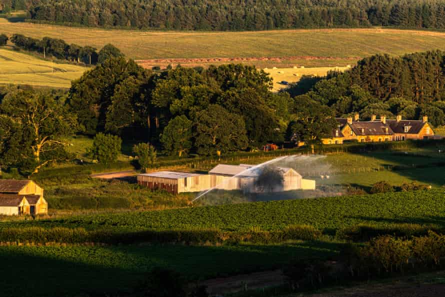 Potatoes being watered on a farm in the Scottish Borders