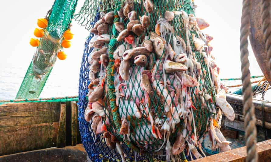 Fish in a trawler's nets off of Newhaven, East Sussex.