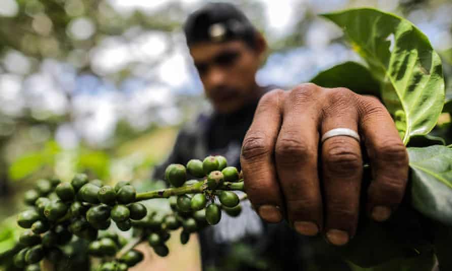 A coffee producer in Jinotega, Nicaragua.