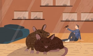 The rats who sniff out tuberculosis | Science | The Guardian