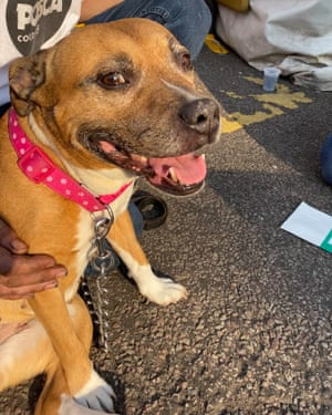 Le projet pour animaux de compagnie aide à sortir les dormeurs de la rue du Royaume-Uni | Société