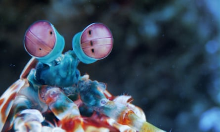 what the world might look like through the eyes of a mantis shrimp.
