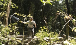 With a deft flick of his wrist backwards Professor Bayliss nets another potential new species of butterfly. The other team members dubbed him 'forest ninja'