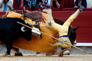 A picador falls from his horse during a bullfight in Madrid