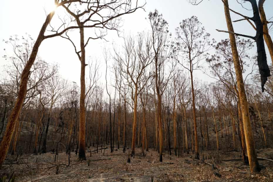 The aftermath of the devastating bushfires near Surf Beach, south of Batemans Bay.
