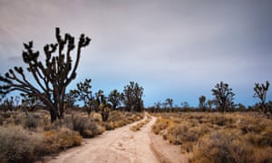 Vanishing Joshua Trees Climate Change Will Ravage Us National Parks
