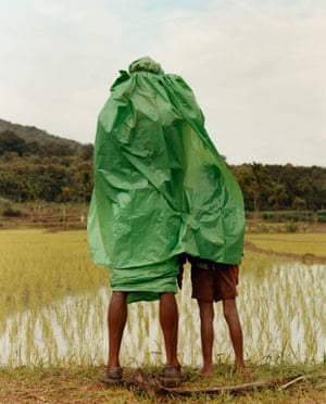 Man and boy looking over rice paddy field