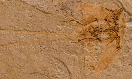 Meet Junornis: the tiny Cretaceous bird which reveals the earliest form of bounding flight