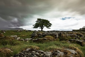 Wild Ingleborough in the Yorkshire Dales is a new environmental project that has been billed as a blueprint for landscape restoration ahead of the COP26 climate summit. Over the next 12 months, the Wild Ingleborough project will create around 40 hectares of new native woodland through the planting of 30,000 trees and natural regeneration